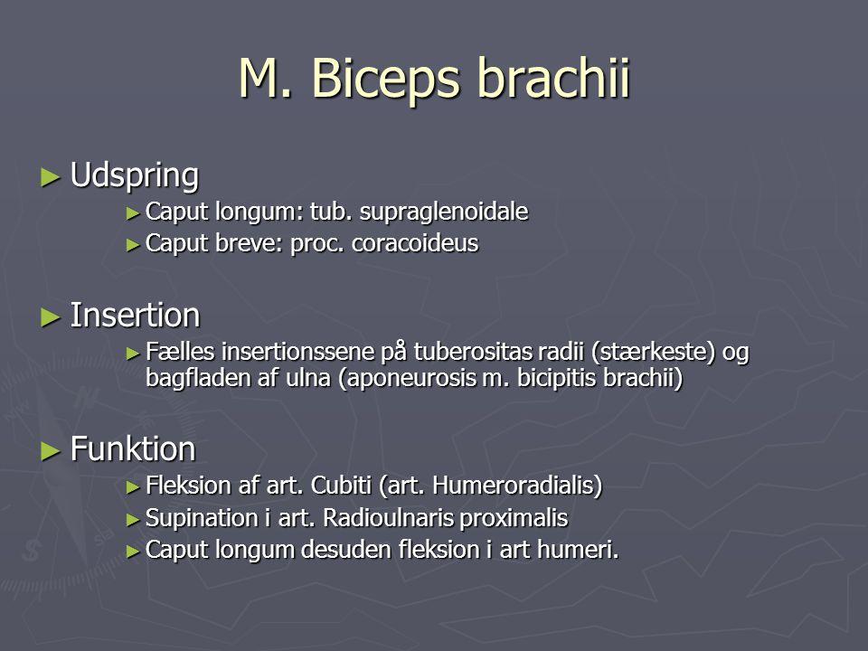 M. Biceps brachii ► Udspring ► Caput longum: tub. supraglenoidale ► Caput breve: proc. coracoideus ► Insertion ► Fælles insertionssene på tuberositas