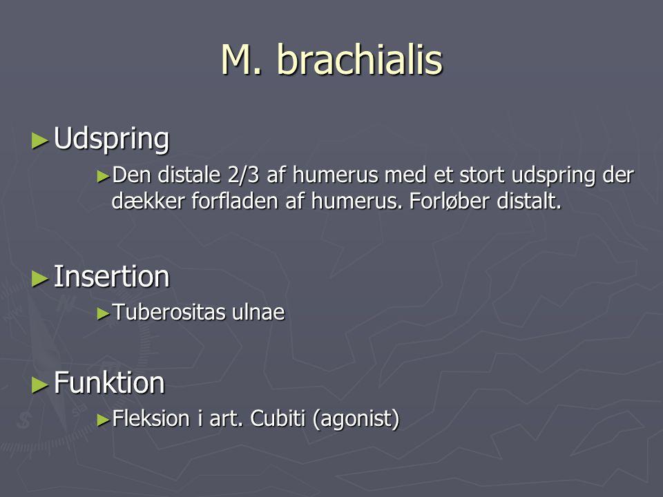 M. brachialis ► Udspring ► Den distale 2/3 af humerus med et stort udspring der dækker forfladen af humerus. Forløber distalt. ► Insertion ► Tuberosit