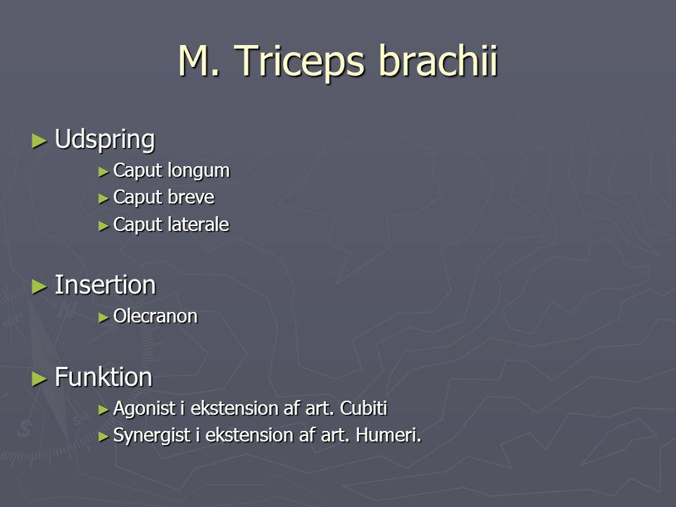 M. Triceps brachii ► Udspring ► Caput longum ► Caput breve ► Caput laterale ► Insertion ► Olecranon ► Funktion ► Agonist i ekstension af art. Cubiti ►