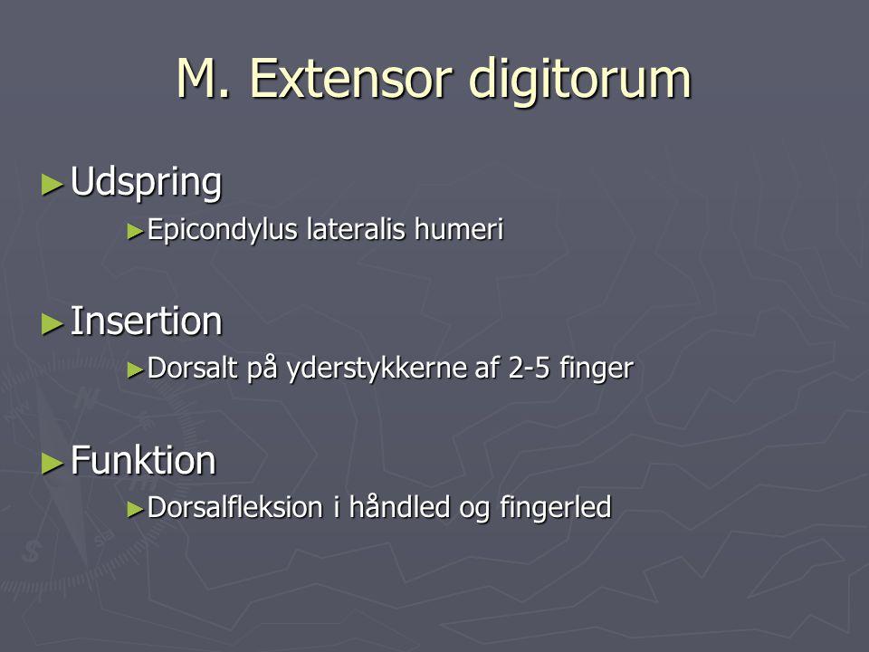 M. Extensor digitorum ► Udspring ► Epicondylus lateralis humeri ► Insertion ► Dorsalt på yderstykkerne af 2-5 finger ► Funktion ► Dorsalfleksion i hån