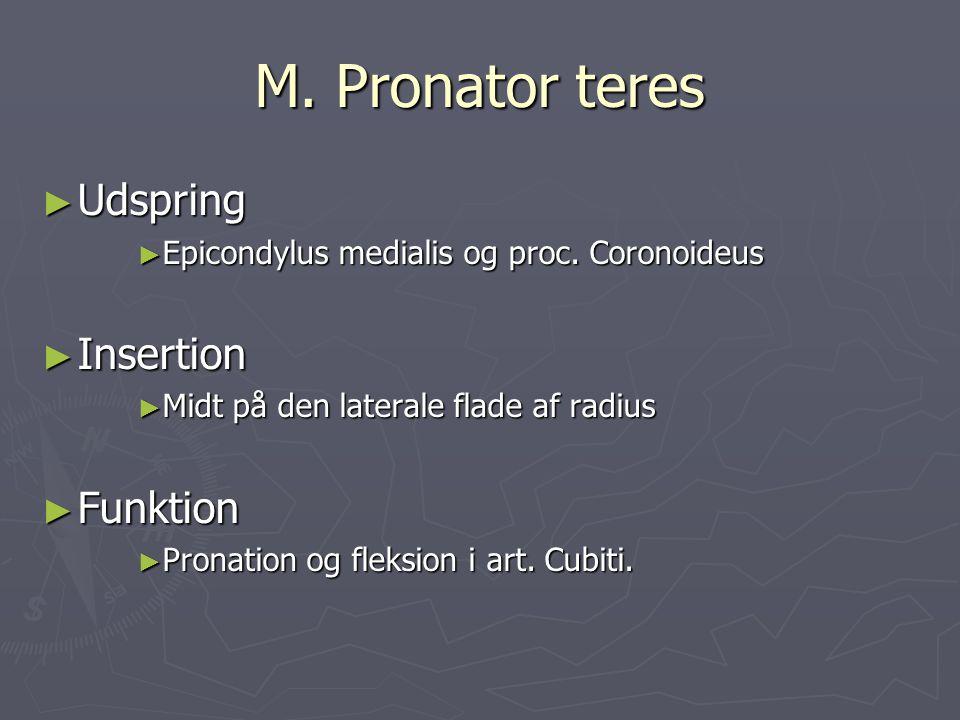 M. Pronator teres ► Udspring ► Epicondylus medialis og proc. Coronoideus ► Insertion ► Midt på den laterale flade af radius ► Funktion ► Pronation og