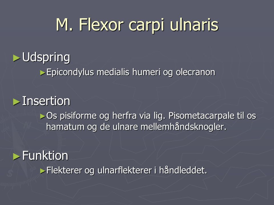M. Flexor carpi ulnaris ► Udspring ► Epicondylus medialis humeri og olecranon ► Insertion ► Os pisiforme og herfra via lig. Pisometacarpale til os ham