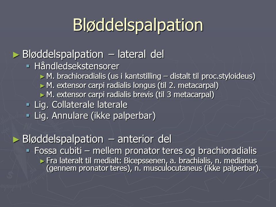 Bløddelspalpation ► Bløddelspalpation – lateral del  Håndledsekstensorer ► M. brachioradialis (us i kantstilling – distalt til proc.styloideus) ► M.