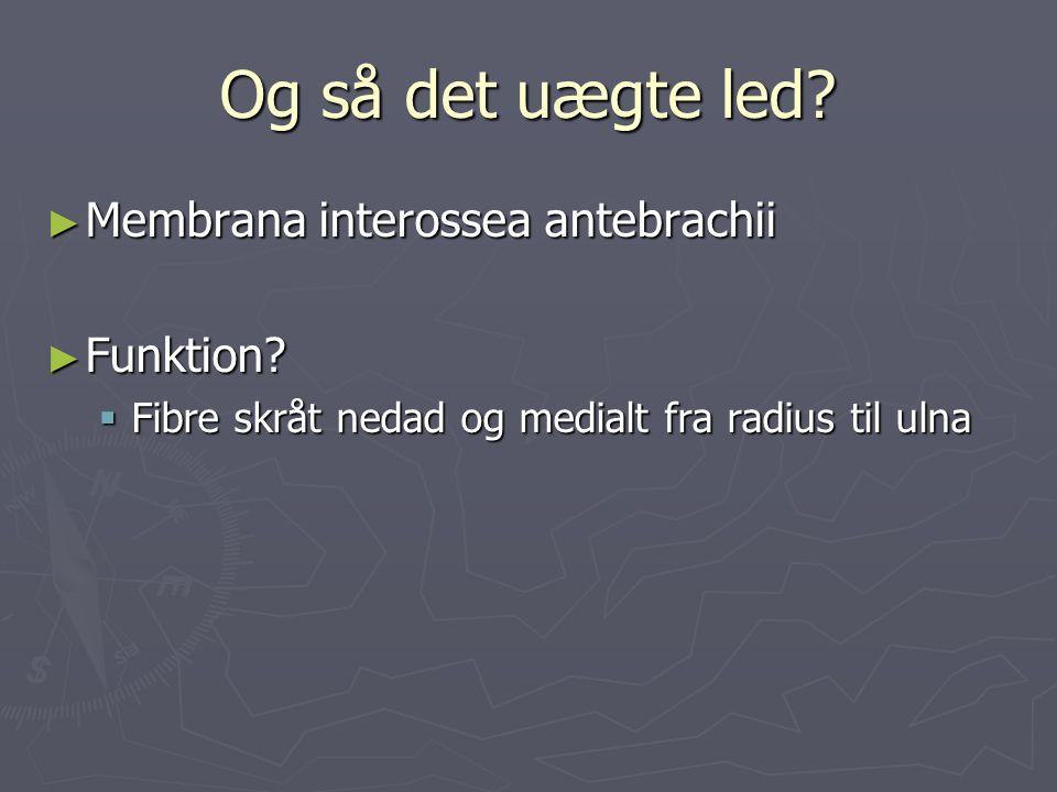 ► Membrana interossea antebrachii ► Funktion?  Fibre skråt nedad og medialt fra radius til ulna