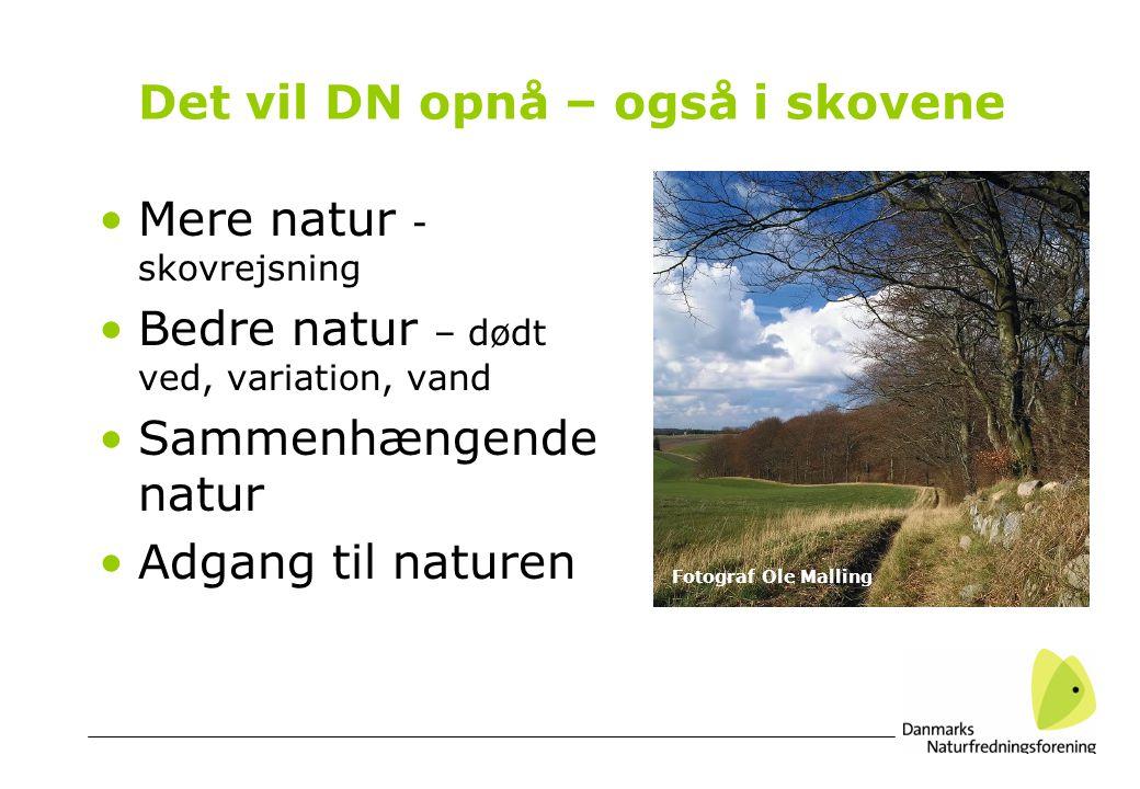 Det vil DN opnå – også i skovene •Mere natur - skovrejsning •Bedre natur – dødt ved, variation, vand •Sammenhængende natur •Adgang til naturen Fotograf Ole Malling