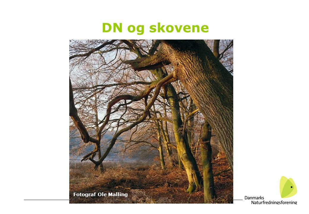 DN og skovene Fotograf Ole Malling