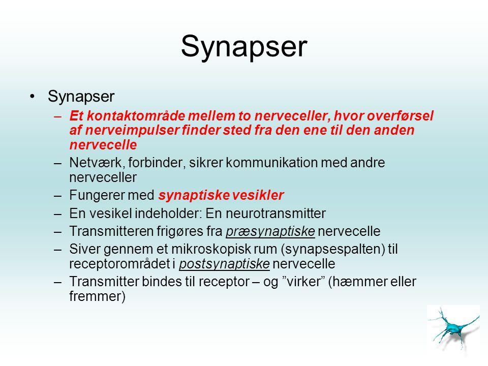Synapser •Synapser –Et kontaktområde mellem to nerveceller, hvor overførsel af nerveimpulser finder sted fra den ene til den anden nervecelle –Netværk
