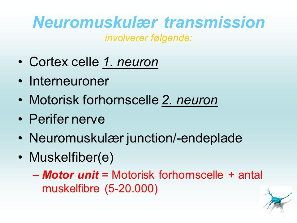 Neuromuskulær transmission involverer følgende: •Cortex celle 1. neuron •Interneuroner •Motorisk forhornscelle 2. neuron •Perifer nerve •Neuromuskulær