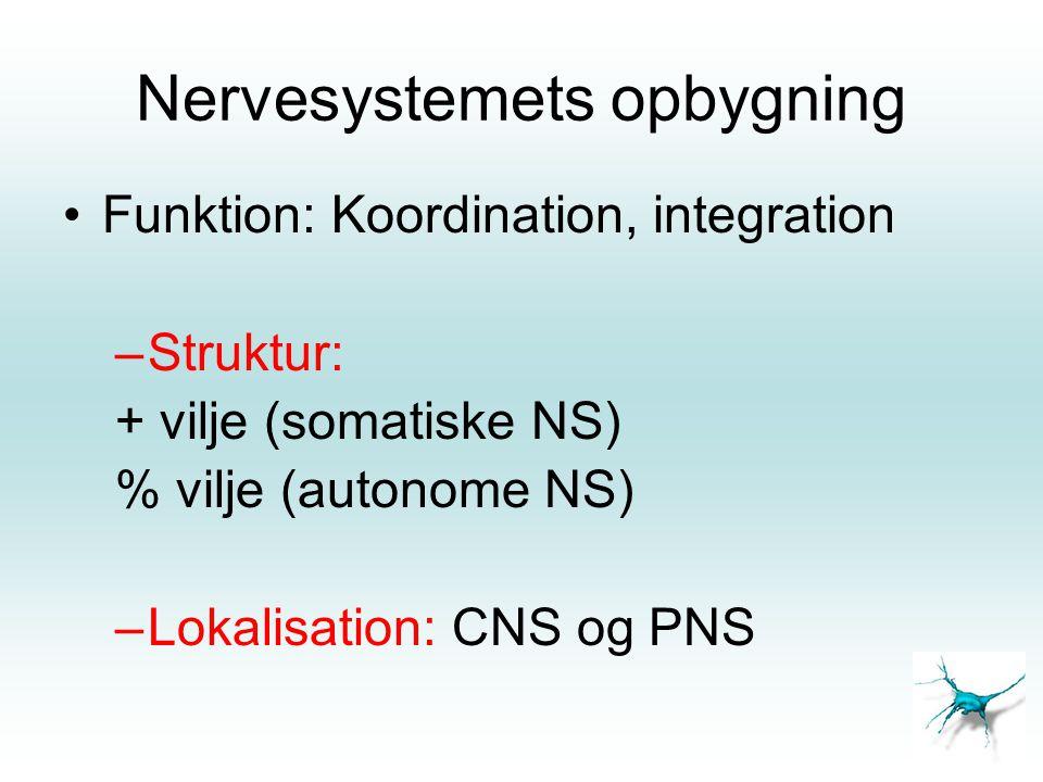 Nervesystemets opbygning •Funktion: Koordination, integration –Struktur: + vilje (somatiske NS) % vilje (autonome NS) –Lokalisation: CNS og PNS