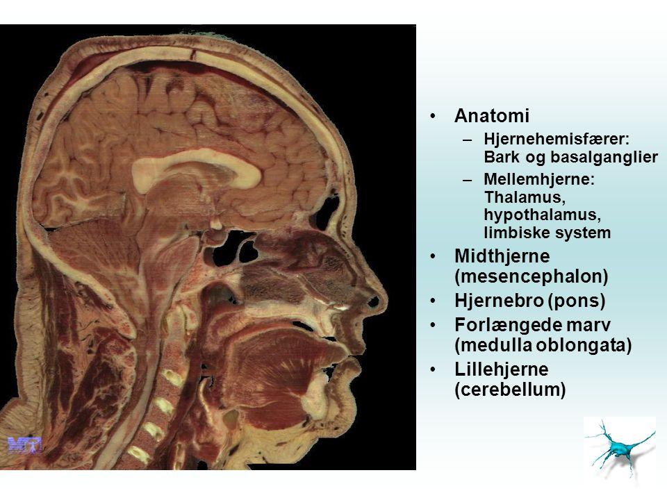 •Anatomi –Hjernehemisfærer: Bark og basalganglier –Mellemhjerne: Thalamus, hypothalamus, limbiske system •Midthjerne (mesencephalon) •Hjernebro (pons)