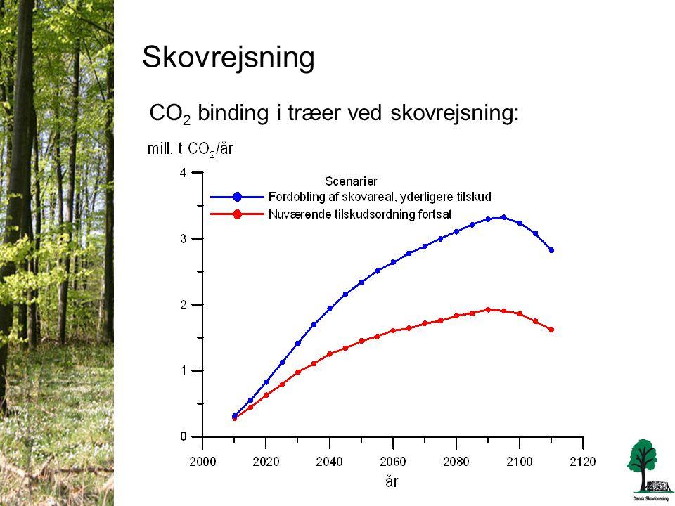 Skovrejsning CO 2 binding i træer ved skovrejsning: