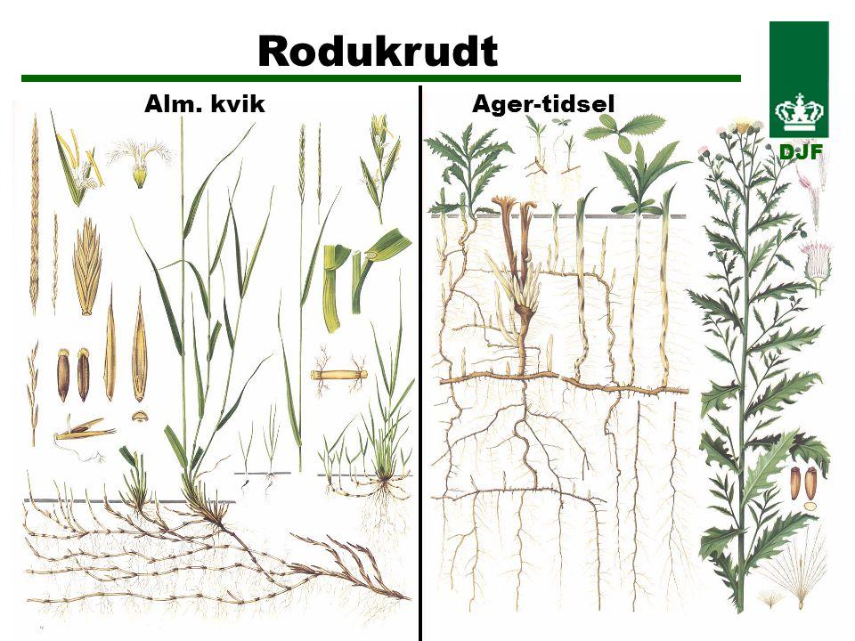 Rodukrudt Alm. kvikAger-tidsel DJF