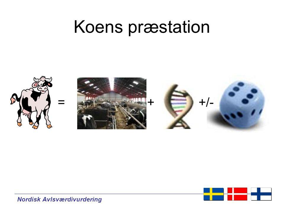 Nordisk Avlsværdivurdering ++/-= Koens præstation