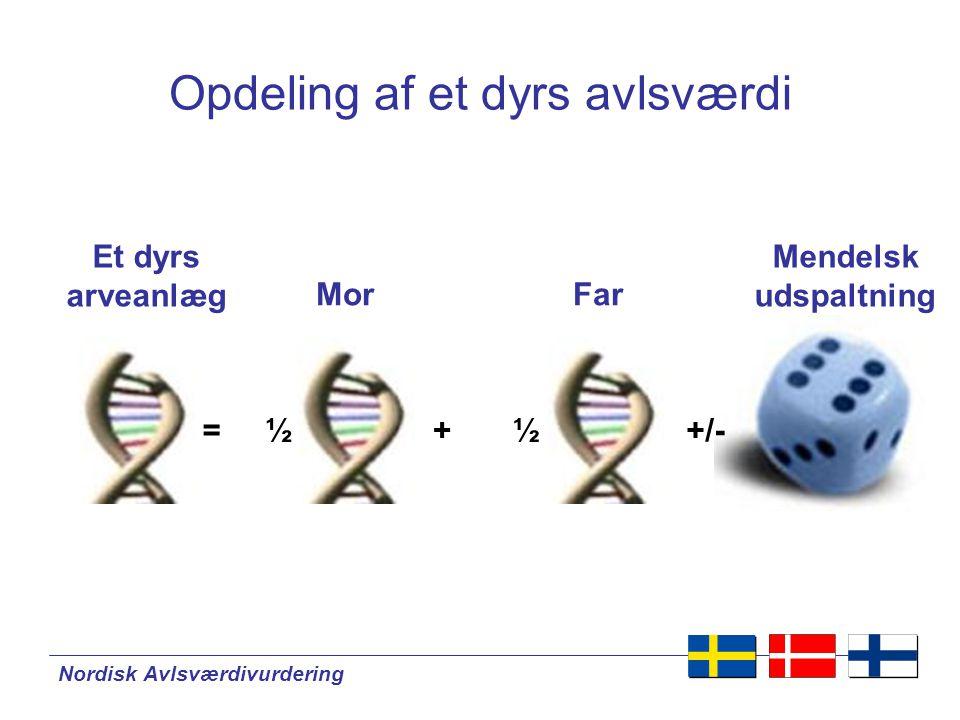 Nordisk Avlsværdivurdering Et dyrs arveanlæg MorFar Mendelsk udspaltning = ½+ ½+/- Opdeling af et dyrs avlsværdi