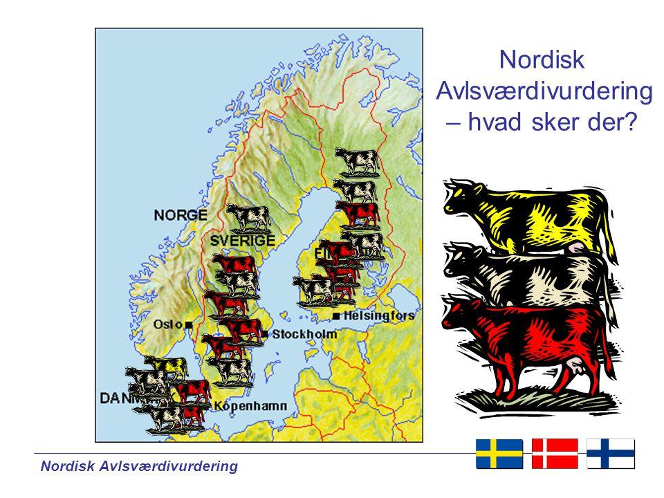 Nordisk Avlsværdivurdering Nordisk Avlsværdivurdering – hvad sker der