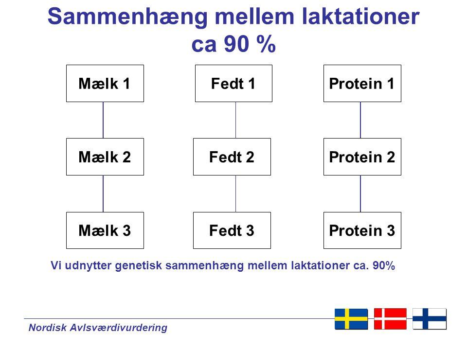 Nordisk Avlsværdivurdering Sammenhæng mellem laktationer ca 90 % Mælk 1Fedt 1 Protein 2Mælk 2 Mælk 3 Fedt 2 Fedt 3 Protein 1 Protein 3 Vi udnytter genetisk sammenhæng mellem laktationer ca.