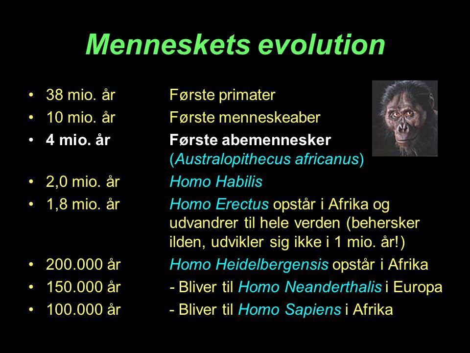 Menneskets evolution •38 mio. årFørste primater •10 mio. årFørste menneskeaber •4 mio. årFørste abemennesker (Australopithecus africanus) •2,0 mio. år