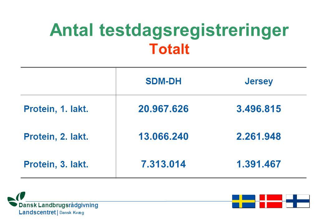 12 Dansk Landbrugsrådgivning Landscentret | Dansk Kvæg Antal testdagsregistreringer Totalt SDM-DHJersey Protein, 1.