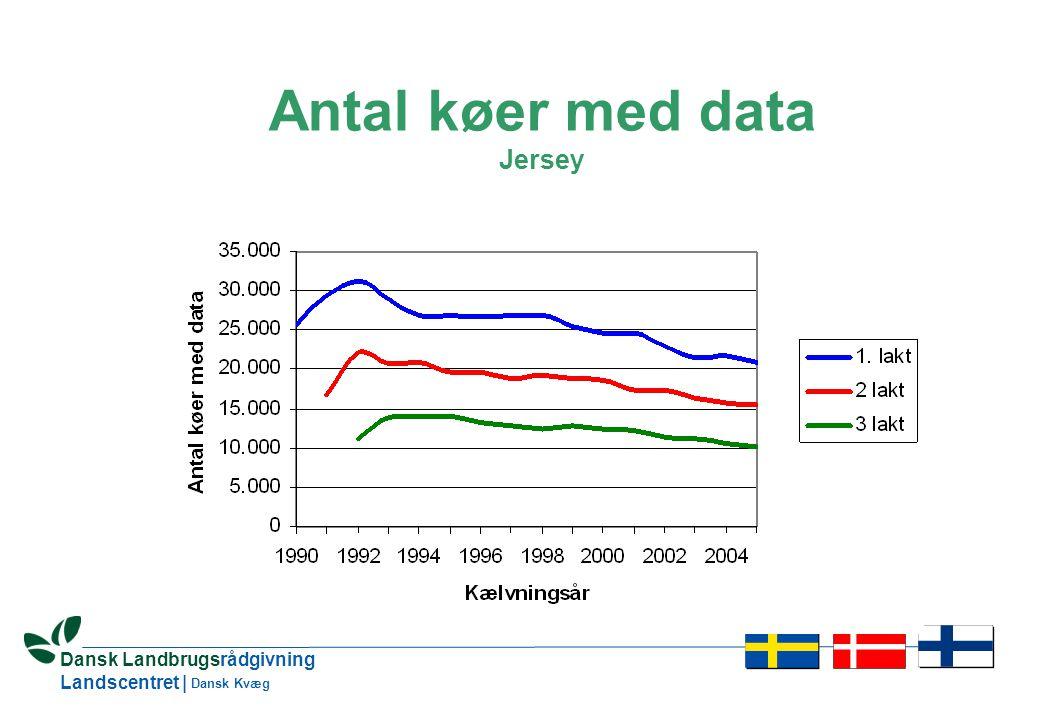 5 Dansk Landbrugsrådgivning Landscentret | Dansk Kvæg Antal køer med data Jersey
