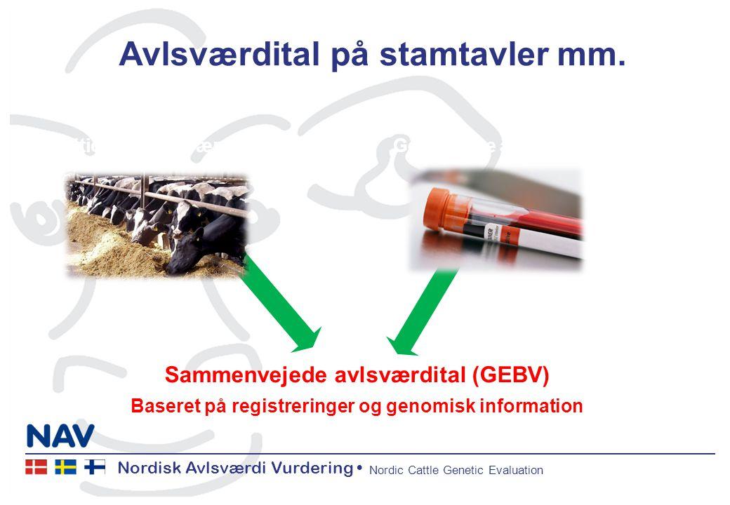 Nordisk Avlsværdi Vurdering • Nordic Cattle Genetic Evaluation Avlsværdital på stamtavler mm.