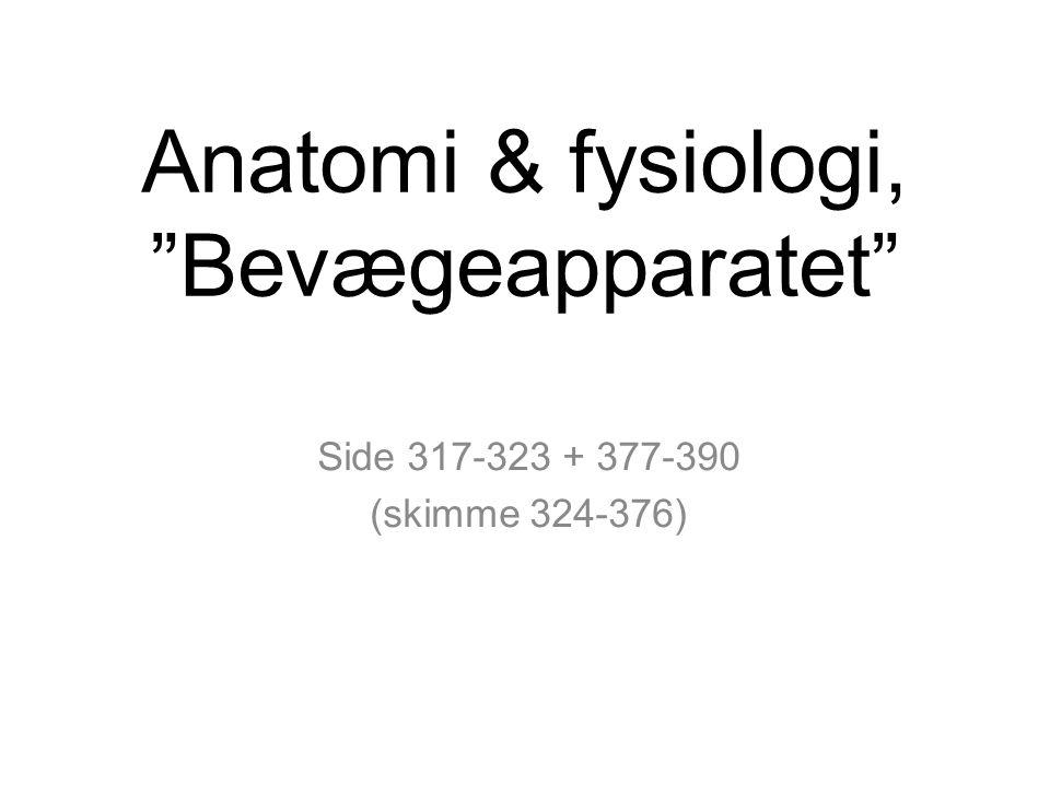 Anatomi & fysiologi, Bevægeapparatet Side 317-323 + 377-390 (skimme 324-376)