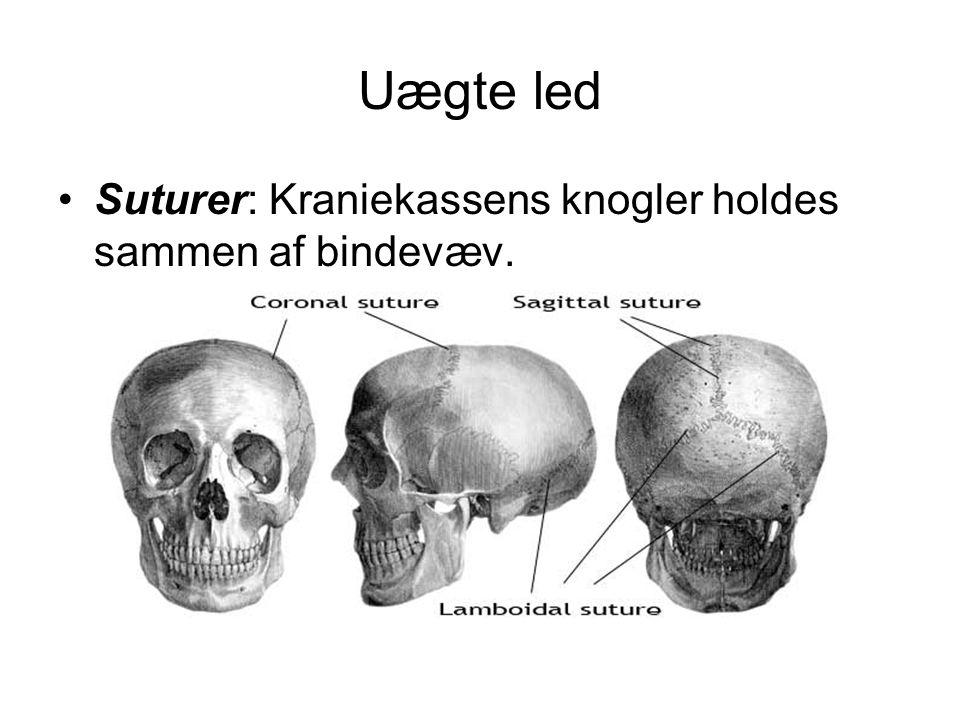 Uægte led •Suturer: Kraniekassens knogler holdes sammen af bindevæv.