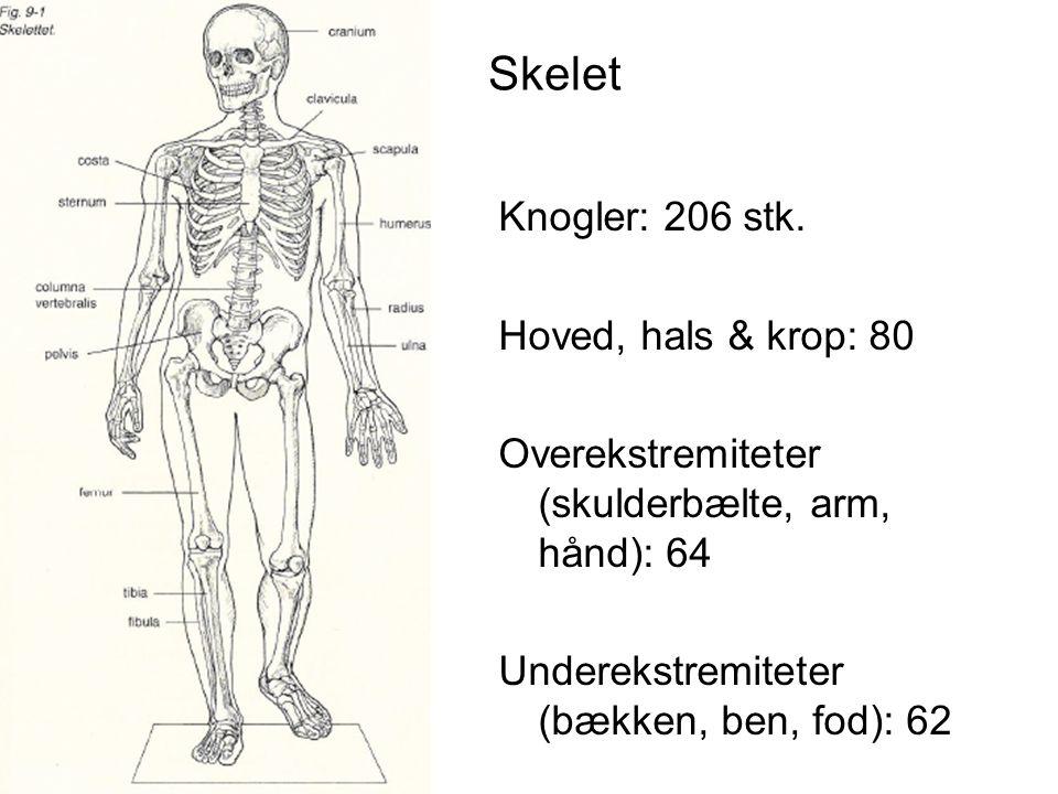 Skelet Knogler: 206 stk.