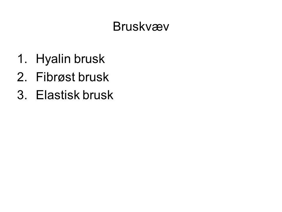 Bruskvæv 1.Hyalin brusk 2.Fibrøst brusk 3.Elastisk brusk