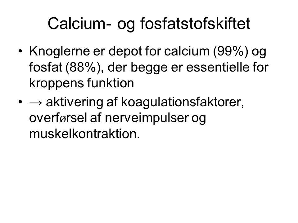 Calcium- og fosfatstofskiftet •Knoglerne er depot for calcium (99%) og fosfat (88%), der begge er essentielle for kroppens funktion •→ aktivering af koagulationsfaktorer, overf ø rsel af nerveimpulser og muskelkontraktion.