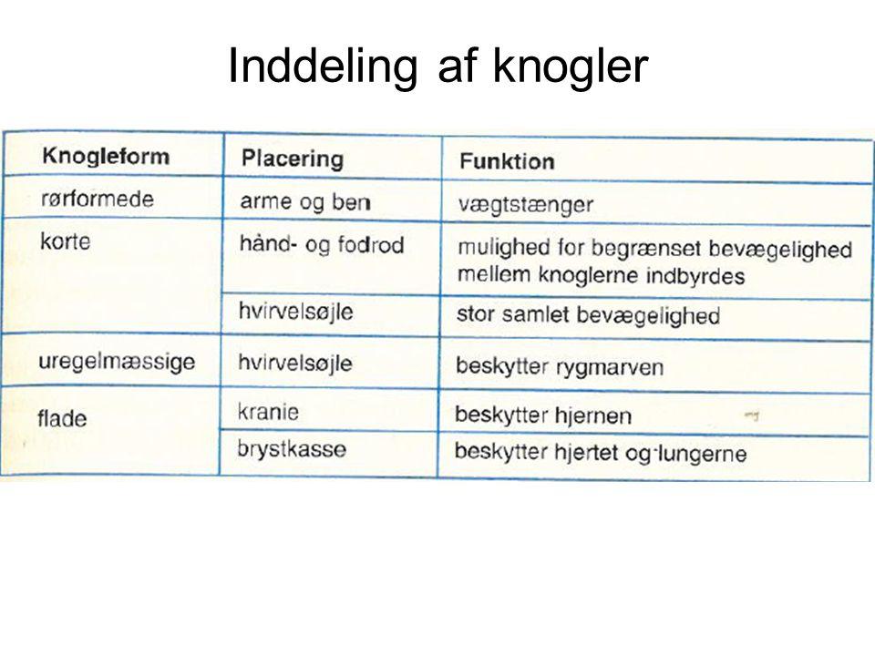Hypermobilitet •1/2 af hypermobile danskere får gener •Hypermobilitet øger risikoen for: •Forstuvninger - især i finger-, hånd- og fodled •Løfteskader •Skulder af led •Bækkenproblemer •Gener i forbindelse med graviditet •Nedsynkning af fodbuerne (platfod) •Slidgigt i 30-40 års alderen