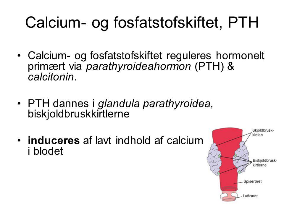 Calcium- og fosfatstofskiftet, PTH •Calcium- og fosfatstofskiftet reguleres hormonelt primært via parathyroideahormon (PTH) & calcitonin.