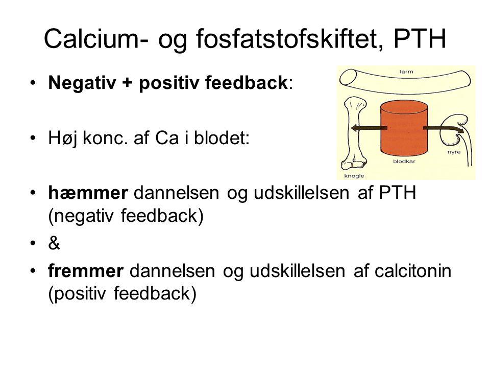 Calcium- og fosfatstofskiftet, PTH •Negativ + positiv feedback: •Høj konc.