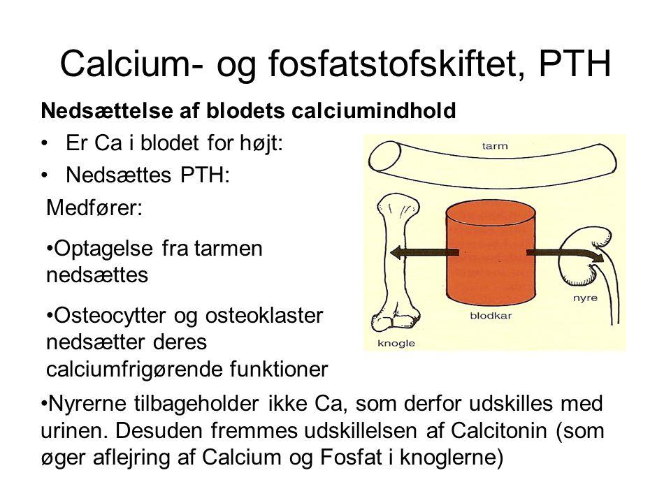 Calcium- og fosfatstofskiftet, PTH Nedsættelse af blodets calciumindhold •Er Ca i blodet for højt: •Nedsættes PTH: Medfører: •Optagelse fra tarmen nedsættes •Osteocytter og osteoklaster nedsætter deres calciumfrigørende funktioner •Nyrerne tilbageholder ikke Ca, som derfor udskilles med urinen.