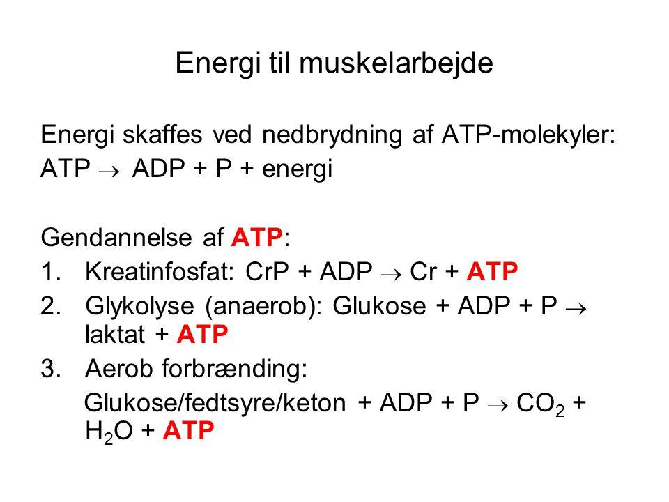 Energi til muskelarbejde Energi skaffes ved nedbrydning af ATP-molekyler: ATP  ADP + P + energi Gendannelse af ATP: 1.Kreatinfosfat: CrP + ADP  Cr + ATP 2.Glykolyse (anaerob): Glukose + ADP + P  laktat + ATP 3.Aerob forbrænding: Glukose/fedtsyre/keton + ADP + P  CO 2 + H 2 O + ATP
