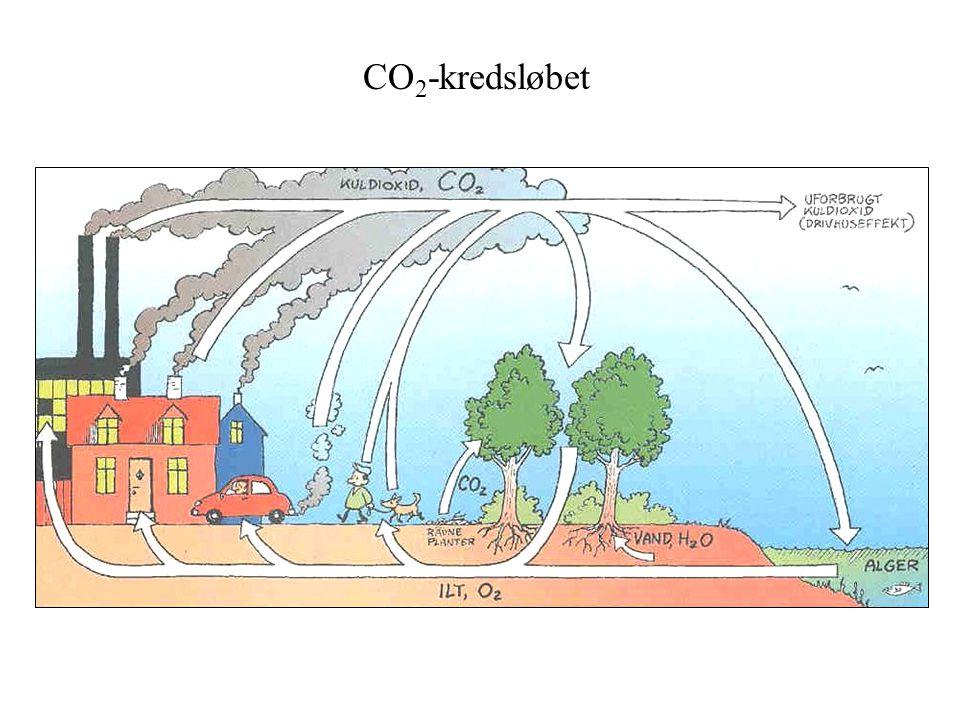 CO 2 -kredsløbet