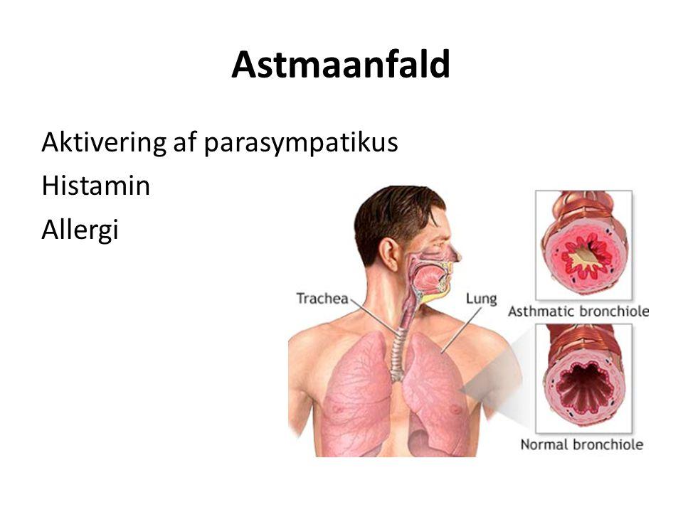 Astmaanfald Aktivering af parasympatikus Histamin Allergi