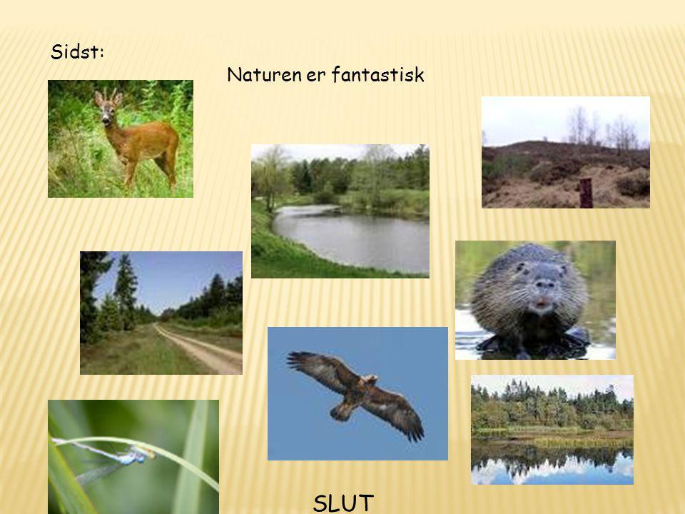 Sidst: Naturen er fantastisk SLUT