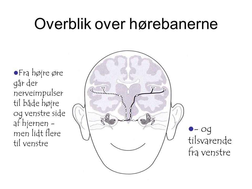 Overblik over hørebanerne  Fra højre øre går der nerveimpulser til både højre og venstre side af hjernen - men lidt flere til venstre  - og tilsvare