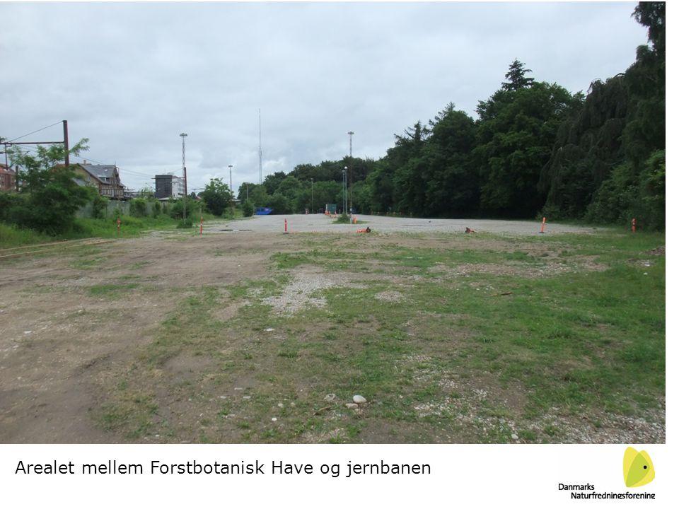 Arealet mellem Forstbotanisk Have og jernbanen