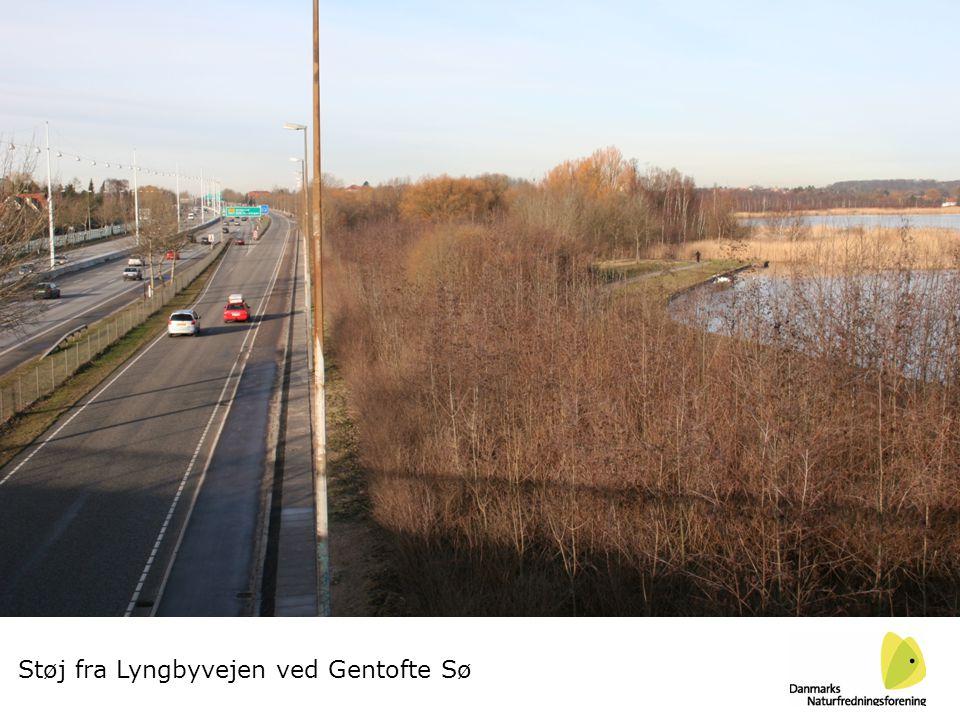 Støj fra Lyngbyvejen ved Gentofte Sø