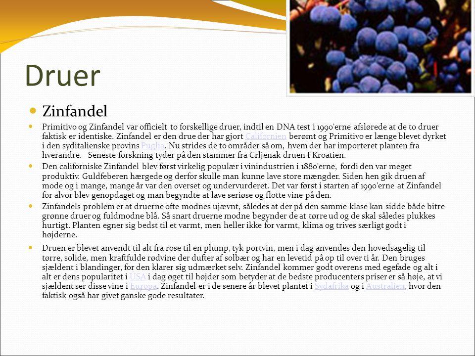 Druer  Zinfandel  Primitivo og Zinfandel var officielt to forskellige druer, indtil en DNA test i 1990 erne afslørede at de to druer faktisk er identiske.