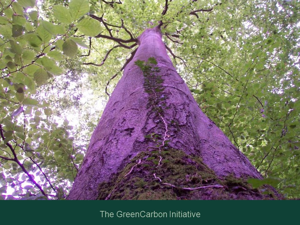 The GreenCarbon Initiative