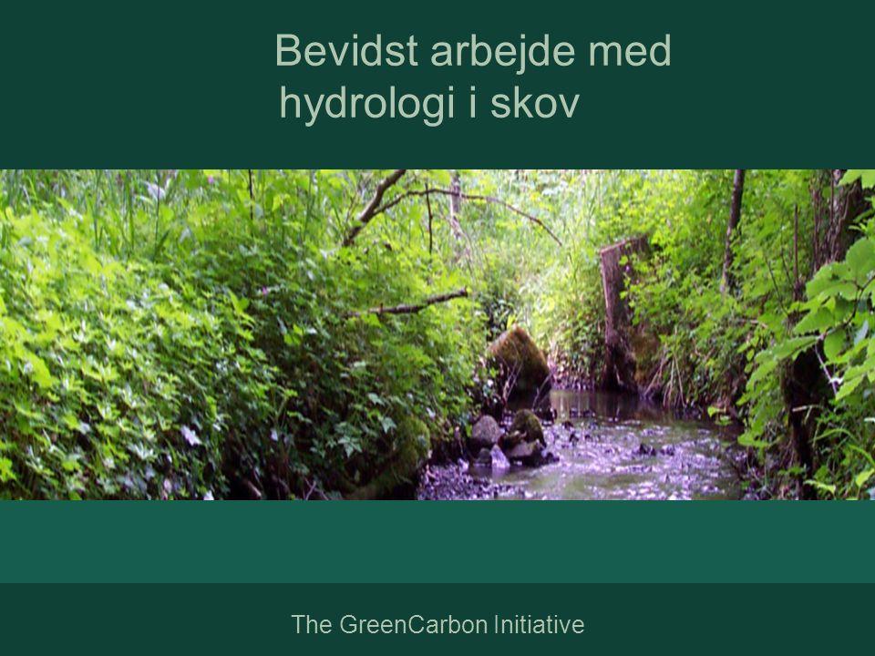 Bevidst arbejde med hydrologi i skov