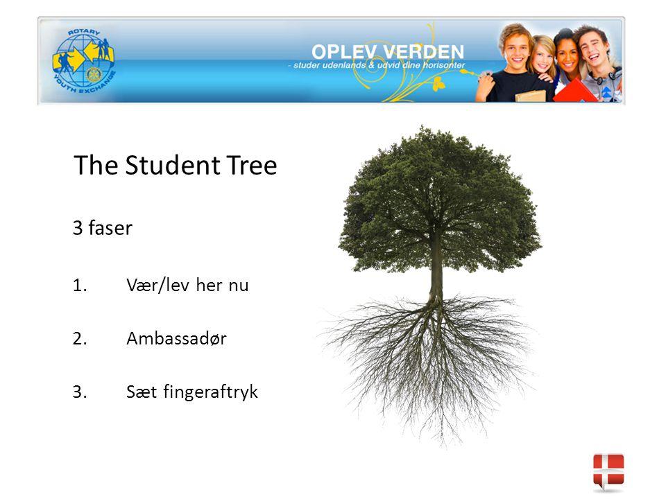 The Student Tree 3 faser 1.Vær/lev her nu 2.Ambassadør 3.Sæt fingeraftryk
