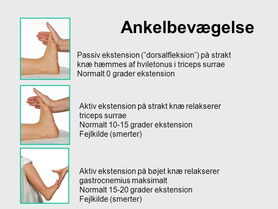 """Ankelbevægelse Passiv ekstension (""""dorsalfleksion"""") på strakt knæ hæmmes af hviletonus i triceps surrae Normalt 0 grader ekstension Aktiv ekstension p"""