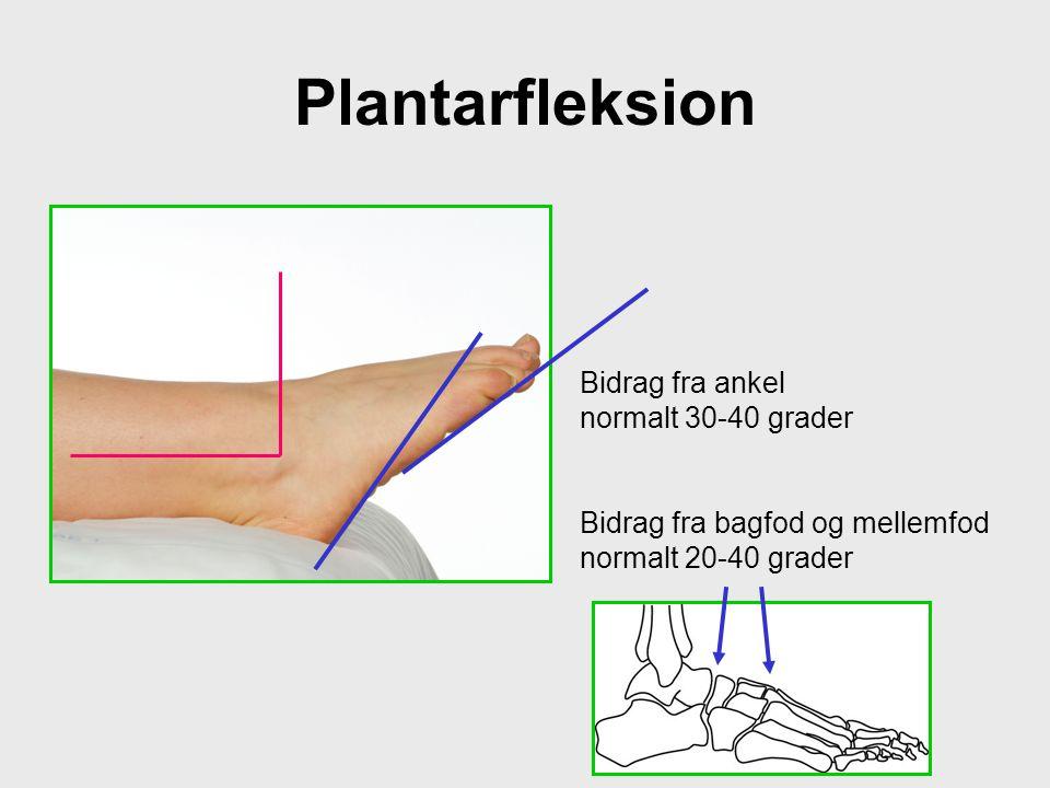 Plantarfleksion Bidrag fra ankel normalt 30-40 grader Bidrag fra bagfod og mellemfod normalt 20-40 grader