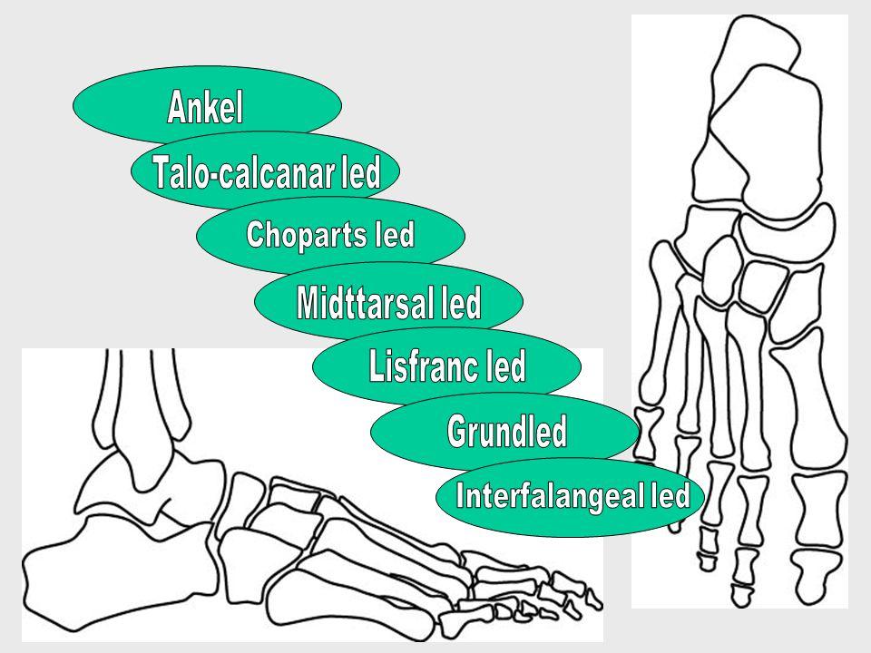 Fodens kontakt med underlaget Hælnedslag: •Bagfod i varus •Forfoden supineret •Mange aktive muskler (alle ekstensorer, peroneus, tib.