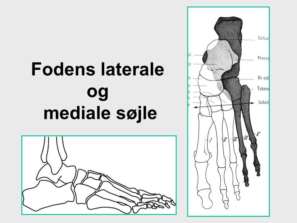 Fodens laterale og mediale søjle