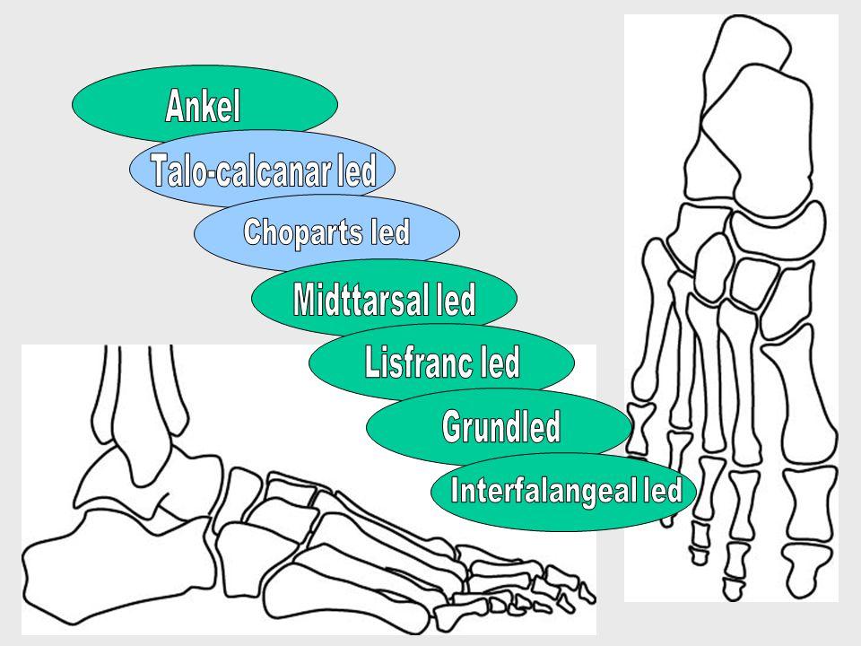 Bagfoden –Talocalcanærleddet •Horisontale glidebevægelser –Chopartsled •Talonaviculærleddet –Rotationsbevægelser •Calcaneocuboidalled det –Vertikale glidebevægelser