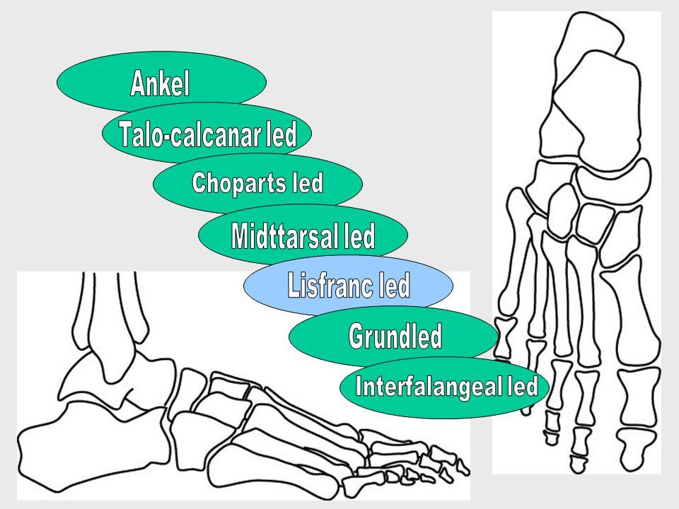 Ankelbevægelse Passiv ekstension ( dorsalfleksion ) på strakt knæ hæmmes af hviletonus i triceps surrae Normalt 0 grader ekstension Aktiv ekstension på strakt knæ relakserer triceps surrae Normalt 10-15 grader ekstension Fejlkilde (smerter) Aktiv ekstension på bøjet knæ relakserer gastrocnemius maksimalt Normalt 15-20 grader ekstension Fejlkilde (smerter)